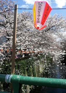 2012-04-04 12.45.14-1.jpg